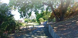 The path leading to the viewing platform in Harding Street Reserve