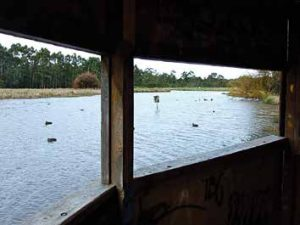 Bird hide at Bushy Park wetlands