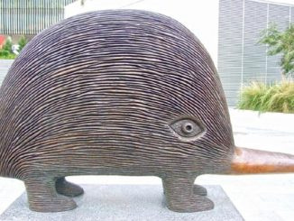 The author's favourite echidna