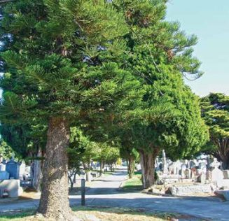 Burwood Cemetery has some very tall trees.
