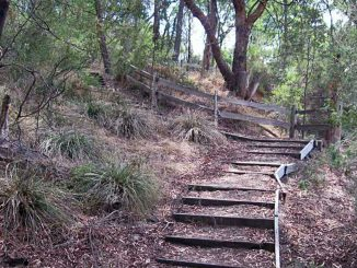 Bellbird Dell steps