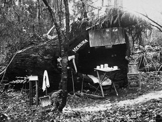 Lyrebird log hut